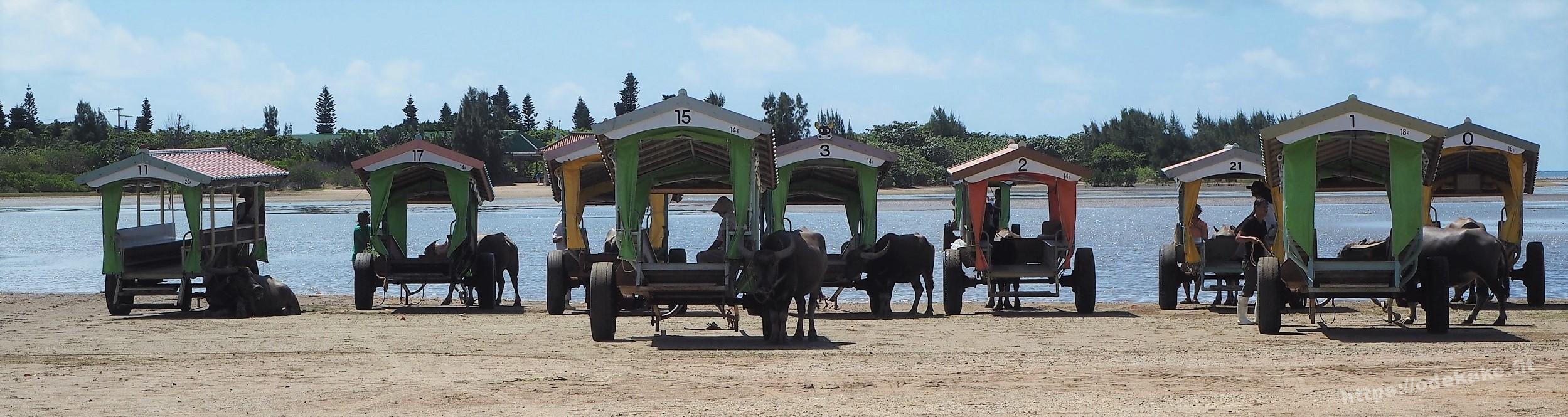 【西表島】次は由布島方面へ♪島へは『水牛車』でのんびり渡ります♪